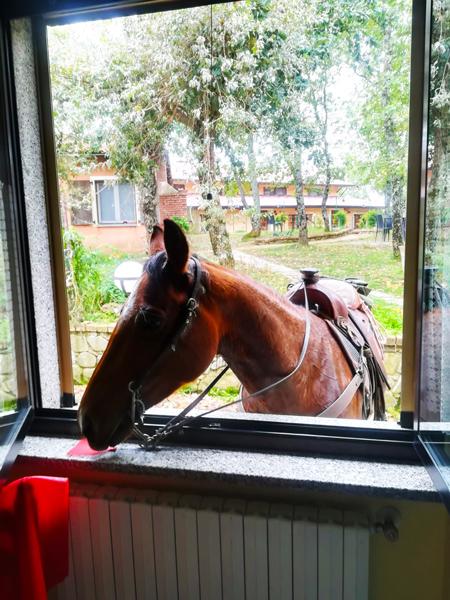 Cavallo-in-casa